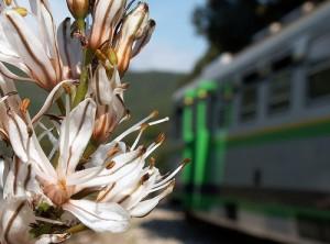 Visiting Sardinia by Green Train