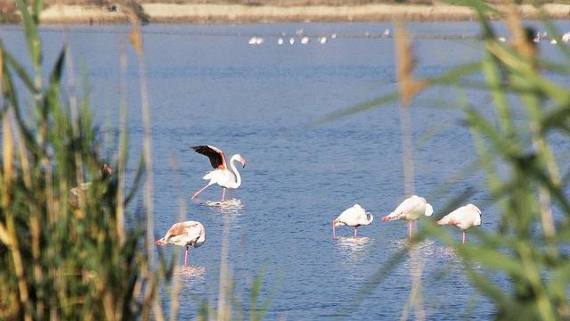 Molentargius Saline Regional Park