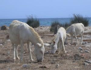 Isla-de-Asinara