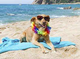 playas-que-permiten-el-acceso-a-mascotas
