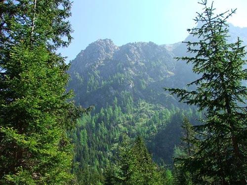 Paesaggio di Foreste aperte 2010