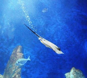 a Cala Gonone per l'acquario