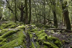 Лес Кампидано (Campidano) на Сардинии